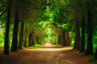 Walkway,Lane,Path,With,Green,Trees,In,Forest.,Beautiful,Alley