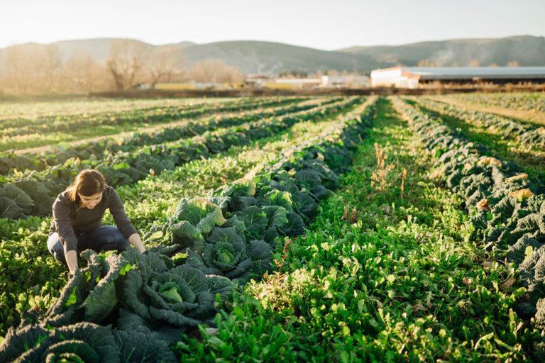 Los productos de proximidad contribuyen a la sostenibilidad para el cuidado del medioambiente